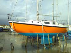 Westerly Tiger
