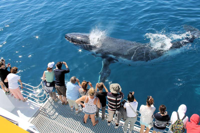Passenger / Whale Watching Catamaran